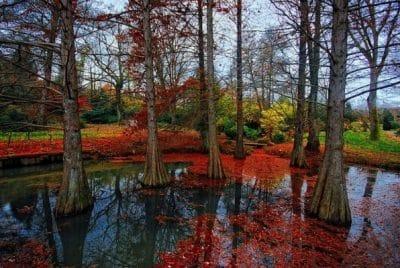 Atatürk Arboretumu 01