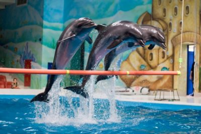 Dolphinarium 05