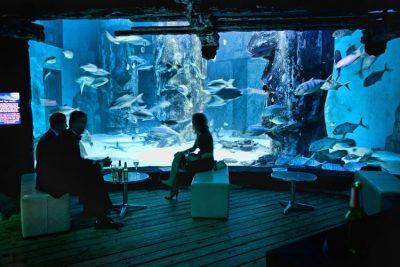 London Aquarium - 02