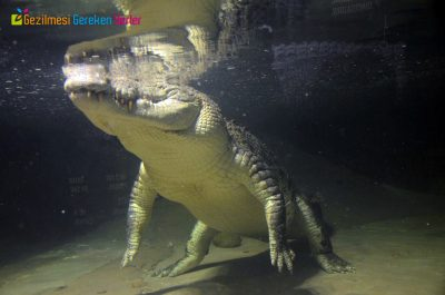 Emaar Akvaryum ve Sualtı Hayvanat Bahçesi nasıl gidilir