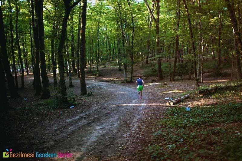 Tepecik Çamlık Piknik Alanı Giriş Ücreti