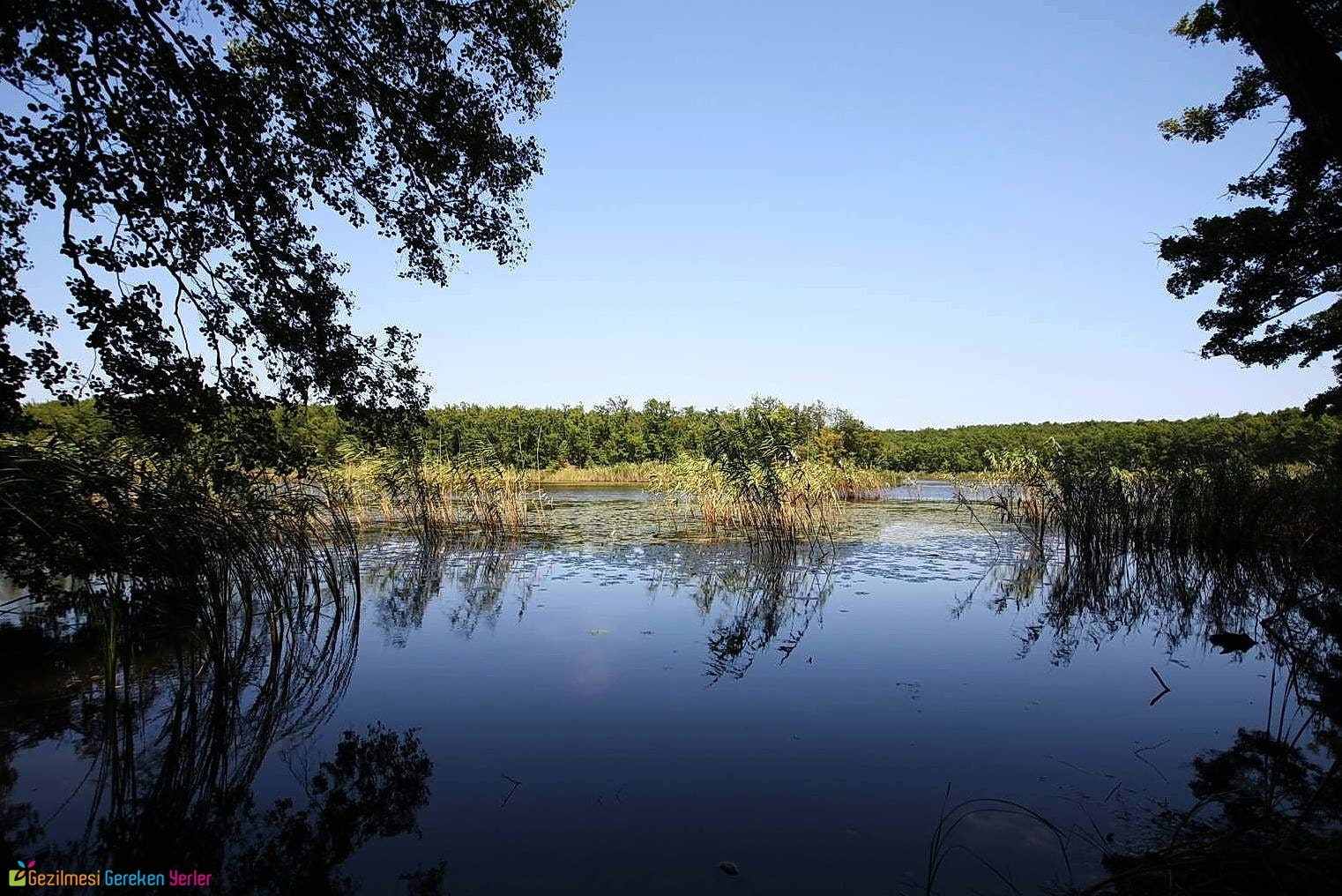 İğneada Hamam Gölü Longozu