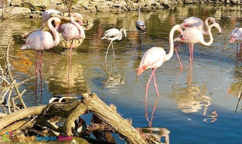 Flamingo Köy Hakkında Gezi Bilgiler