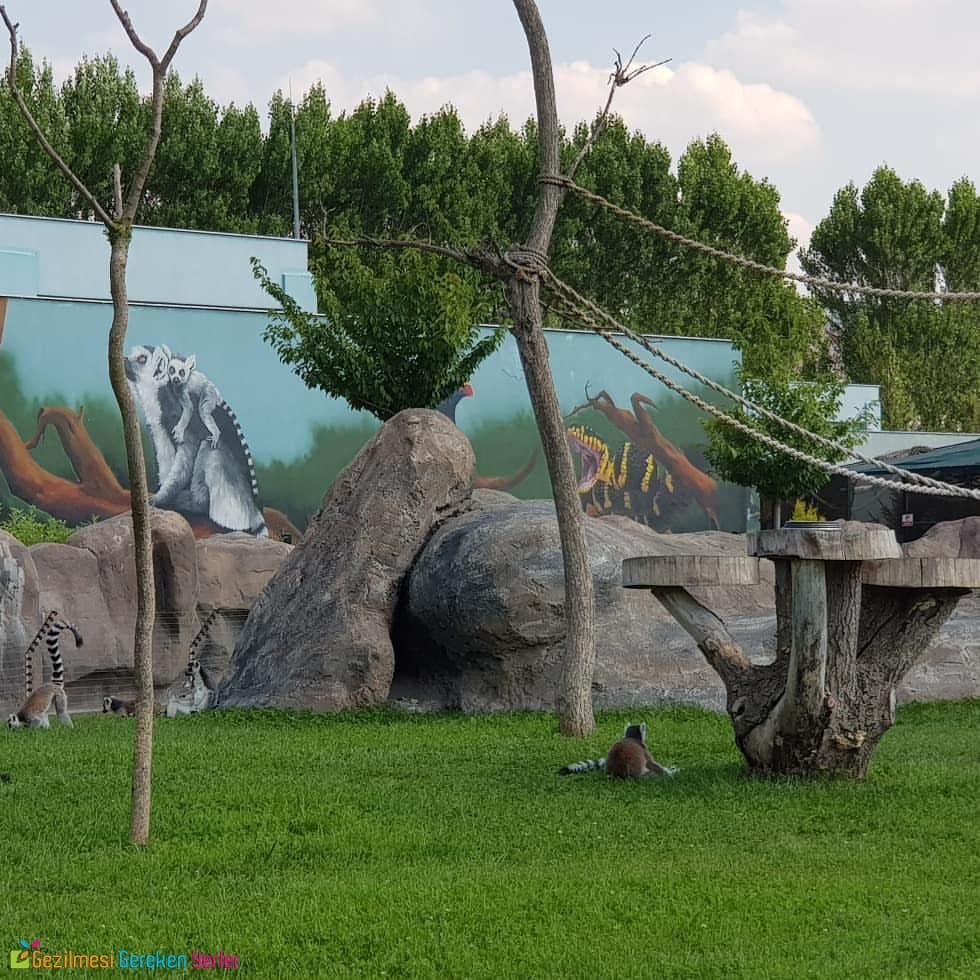 Eskişehir Hayvanat Bahçesi Giriş Ücreti